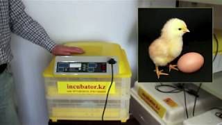 Tam Avtomatik Inkubator Satilir-Qusculuq-Toyug-Bildircin