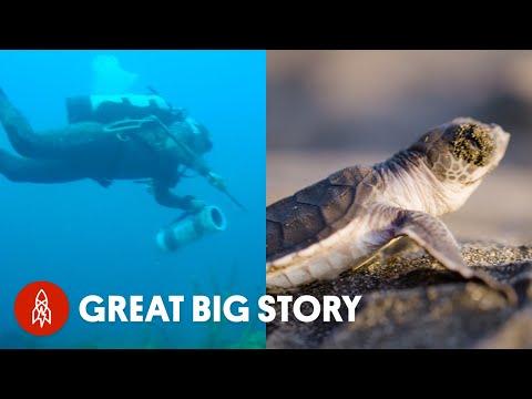 Saving Our Seas: Ocean Warriors Battling To Turn the Tide
