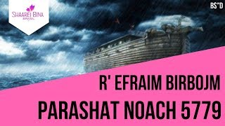 Parashat Noach