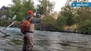 Putah creek fly fishing