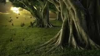Dregd - Gathering Pebbels [Lyrics on screen]