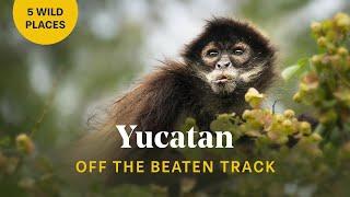 5 Must Do Adventures in the Yucatan Peninsula, Mexico