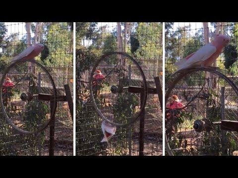 Любимая карусель попугая