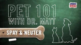 Pet 101: Spay or Neuter Your Pets