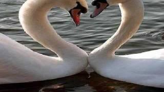 MY VALENTINE - Jim Brickman/Martina McBride (Lyrics)