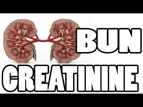Video ✔✔✔ What is BUN and Creatinine - Kidney Function Test ✔✔✔