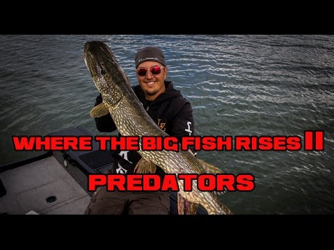 WHERE THE BIG FISH RISES II PREDATOR
