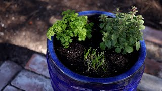 Planting Herbs in Containers for Beginners 🌿// Garden Answer