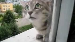 Злой котэ! (Malicious cat)
