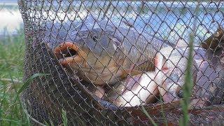 Рыбалка на платных водоемах в николаевской области