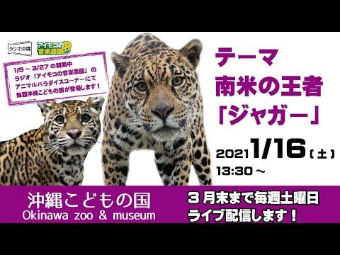【沖縄こどもの国ズージアムライブ!】南米の王者『ジャガー』