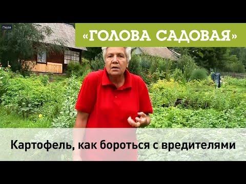Голова садовая - Картофель, как бороться с вредителями