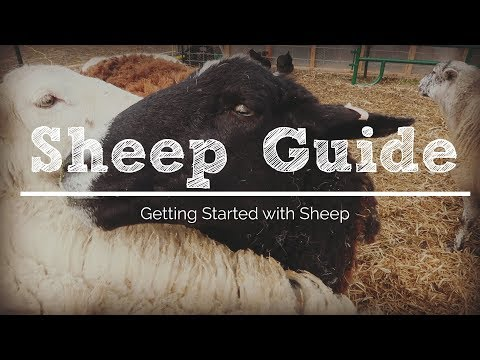 , title : '6 Things You Need to Get Started with Sheep