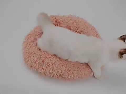 """""""SuperFluff"""" Pet Bed - The Best Selling Cat Bed and Dog Bed on the Market"""