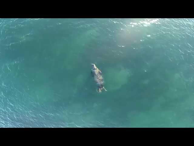Aerial Seal