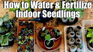 How & When to Water & Fertilize Indoor Seedlings & DIY Fungus Gnat Traps / Spring Garden Series #2