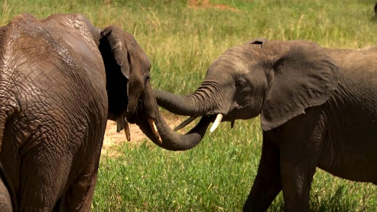 Tansania: Elefanten (1:34)