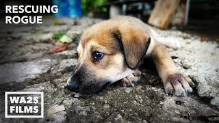 Puppy Abandoned to Die in Empty Home Is Rescued! Rescuing Rogue - Hope For Dogs   My DoDo