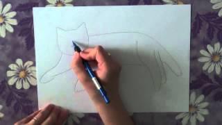 Смотреть онлайн Как нарисовать кошку для начинающих