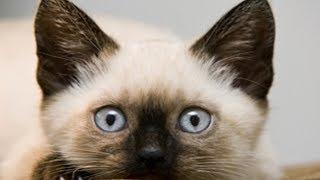 ТОП 5 Лучшие видео про котенка. Смешной котенок ГАВ.