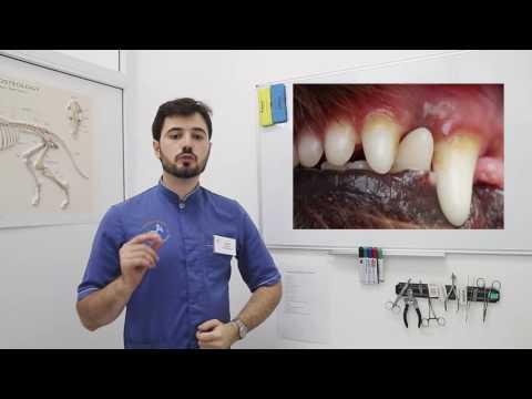 Зубной камень у животных