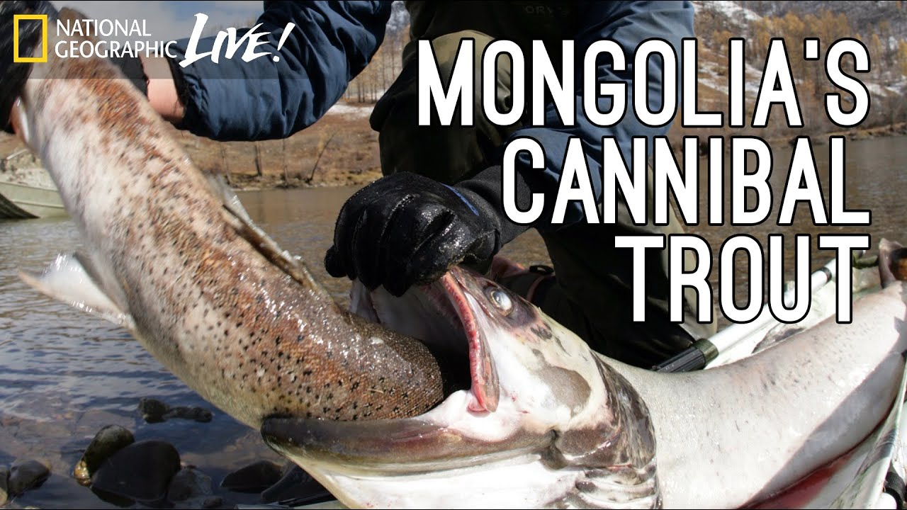 Monster Fish, Part 2: Mongolia's Cannibal Trout | Nat Geo Live thumbnail