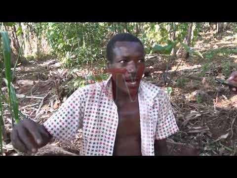 E Buyikwe poliisi elumbye abatema ekibira