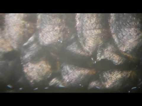 Giardia ay may isang bata sa 10 buwan