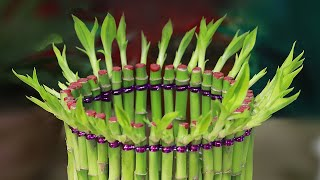 Amazing Lucky Bamboo Decoration Ideas | Lucky Bamboo Plant Care | How to Shape Lucky Bamboo