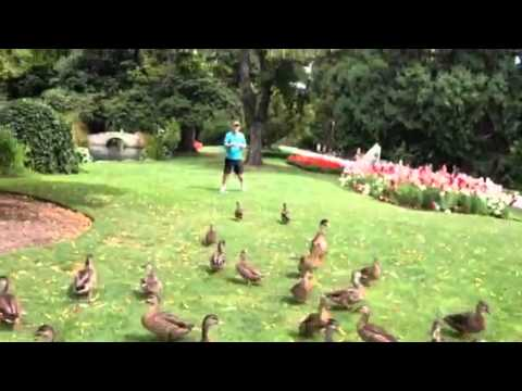 Feeding the Queenstown Ducks