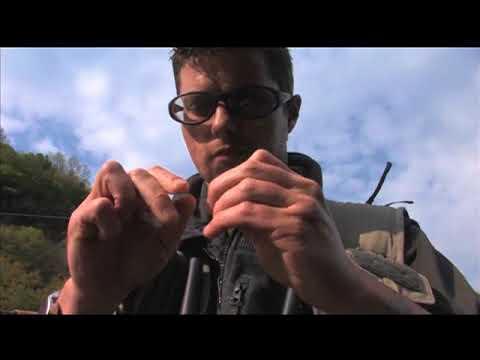 Siccome è necessario cucinare piselli su pesca