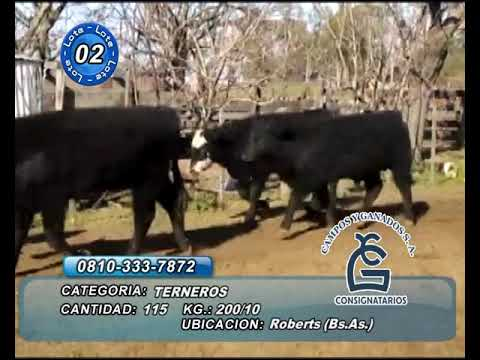 Lote MACHOS - Roberts Bs As