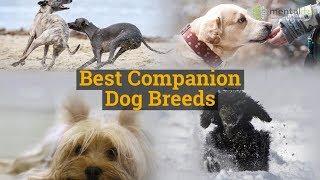 Best Companion Dog Breeds