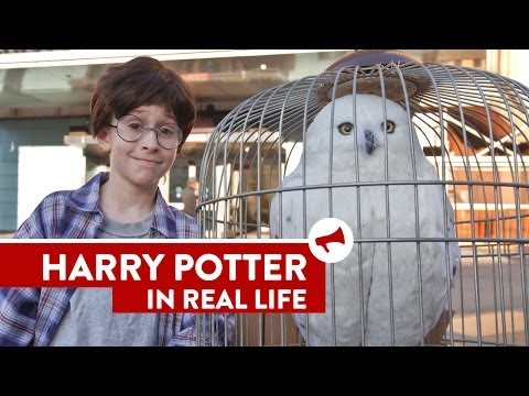Harry Potter In Real Life – Movies In Real Life (Episode 8)