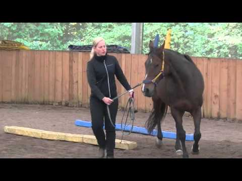 Trainerkurs 2015 by Michael Geitner - Equikinetic®
