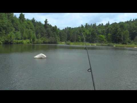powerbait trout fishing in a farm pond