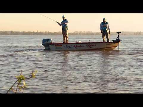 Trailer de dorados con mosca en el Parana Inferior