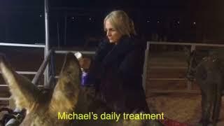 Michael's rescue and progress - video