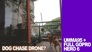 Dog Chase Drone? Or Drone Chase Dog? Umma95 with Full Gopro 6 Cinewhoop FPV