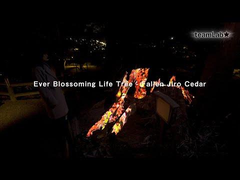 Ever Blossoming Life Tree - Fallen Jiro Cedar