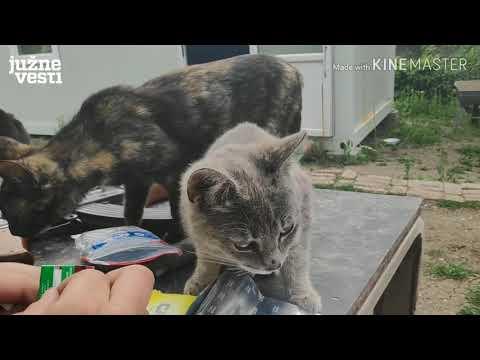 Nišlija napravio sopstveni azil za mačke - trenutno ih čuva na desetine