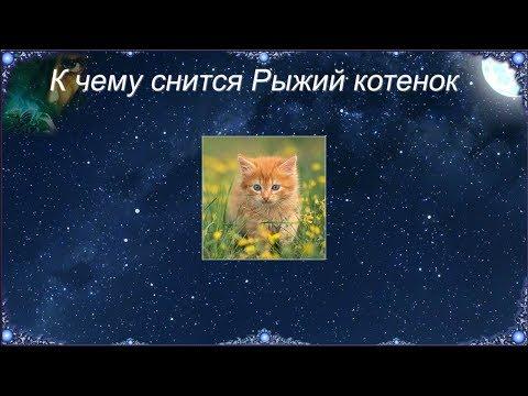 К чему снится Рыжий котенок (Сонник)