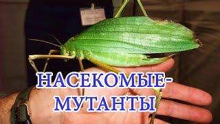 ✅ ТОП 10 Самых больших насекомых в мире