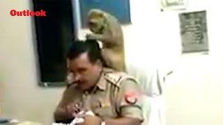 This UP Police Officer Gets Free Hair Treatment From A Monkey