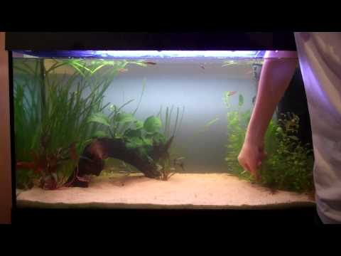 Aquascaping Time lapse of 33 gal