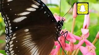 preview picture of video 'حديقة الفراشات بمهرجان الورد بينبع'