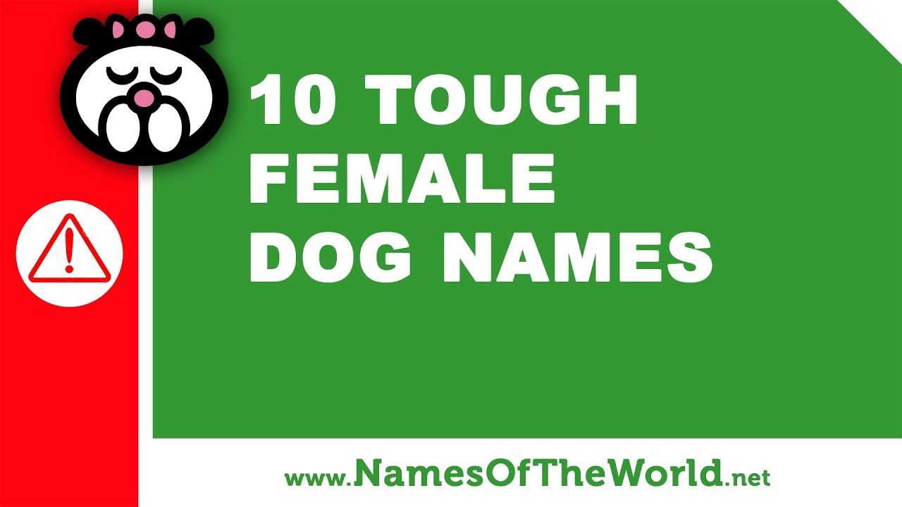 10 tough female dogs names - the best pet names - www.namesoftheworld.net