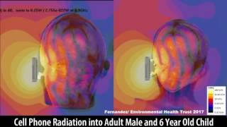 Cell Phone Radiation Into the Brain of an Adult and Child