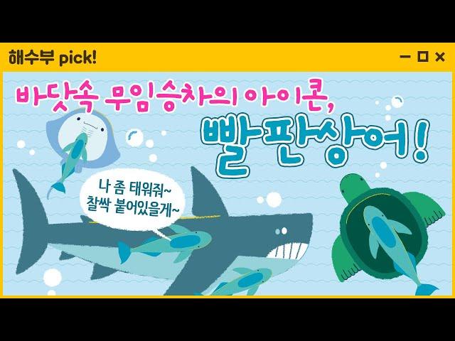 해설사가 들려주는 해양생물 이야기(빨판상어)
