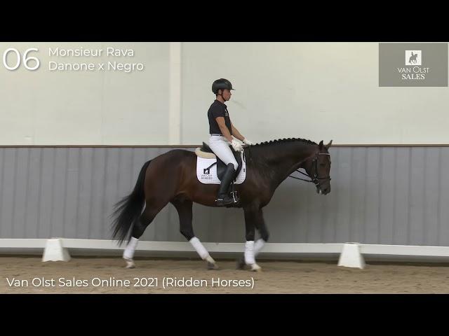 Monsieur Rava under saddle